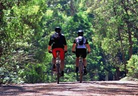 Paseos y rutas en bicicleta
